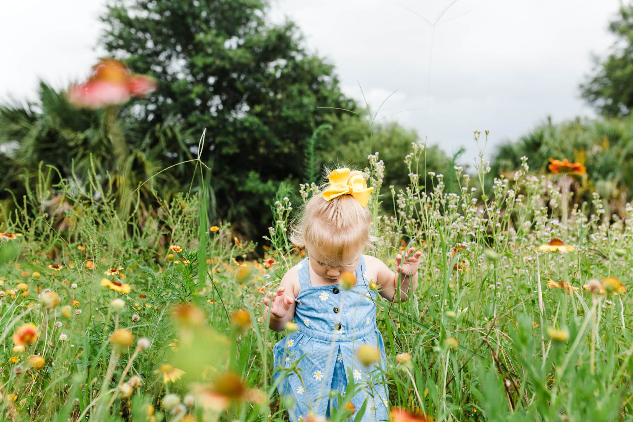 little girl with yellow bow exploring through a field of wildflowers